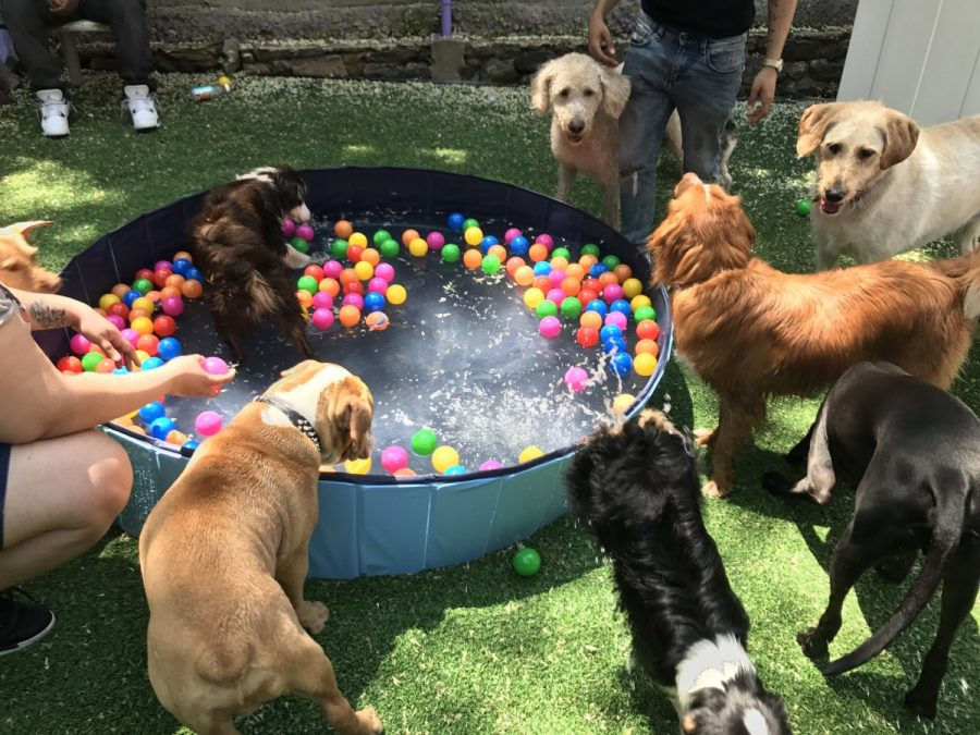 Doggy Day Camp